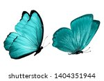Stock photo  blue butterfly natural insect isolated on white background 1404351944