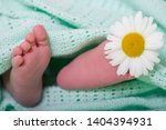 baby feet concept care delicate ... | Shutterstock . vector #1404394931