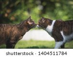 side view of a  tabby white... | Shutterstock . vector #1404511784