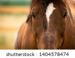 Gorgeous Horse On A Colorado...