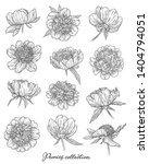 peony flowers set hand drawn in ... | Shutterstock . vector #1404794051