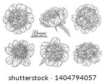 peony flowers set hand drawn in ... | Shutterstock . vector #1404794057