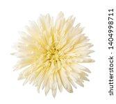 gerbera daisy flower  gerbera... | Shutterstock . vector #1404998711
