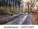 morning sun in the woods | Shutterstock . vector #140517667