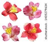 Set Of Four Alstroemeria...