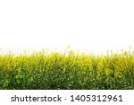 Green Field With Yellow Flower...