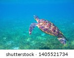 sea turtle by water surface.... | Shutterstock . vector #1405521734