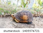 Stock photo the land tortoise walking tortoises aare both reptiles 1405576721
