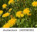 the yellow color of the... | Shutterstock . vector #1405585301