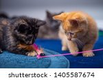 Stock photo orange tabby kitten plays with a group of other kittens 1405587674