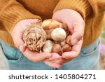 Man Holding Flower Bulbs In His ...