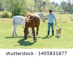 Brown And White Horse With Man...