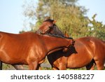 two brown horses nuzzling each... | Shutterstock . vector #140588227