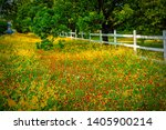 Indian Paintbrush And Yellow...
