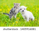 Stock photo playful tabby kitten with chihuahua puppy on green grass 1405916081