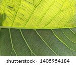 half of the leaves are... | Shutterstock . vector #1405954184