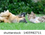 Stock photo dog and cat lying on meadow in the garden 1405982711