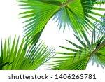 Tropical Palm Leaf Background ...