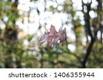 Stock photo falling leave in the park 1406355944