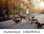 Stock photo dog walker enjoying with group dogs while walking outdoors 1406393411