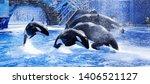 Killer Whale In Water  Acquarium