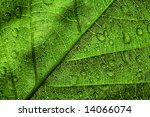 green leaf texture   Shutterstock . vector #14066074