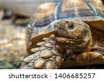 Stock photo close up of african spurred tortoise or geochelone sulcata in the garden sulcata tortoise is 1406685257
