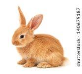 Stock photo baby of orange rabbit on white background 140679187