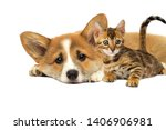 Stock photo puppy and a kitten are lying together on a white background 1406906981