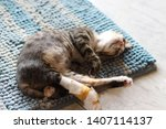 Stock photo rescued kitten with a broken leg mended and sleeping peacefully 1407114137