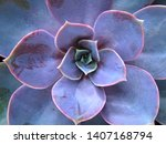 Beautiful Violet Cactus With...