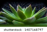 Beautiful Green Cactus With...