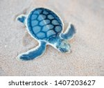 Small photo of Isolated flatback sea turtle hatchling in it's natural habitat on sand at Bare Sand Island in Northern Australia