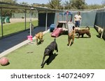 Stock photo a female staff member at a kennel supervises several large dogs playing together 140724097