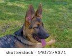 cute puppy of german sheperd...   Shutterstock . vector #1407279371