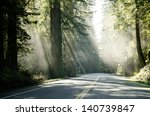 Famous Redwood Trees On The...