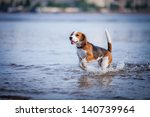 The Dog In The Water  Swim ...