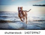 Stock photo the dog in the water swim splash 140739967