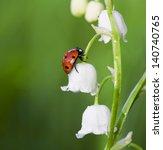 The Ladybird Creeps On A Flowe...