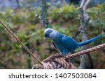 The Spix's Macaw Is A Macaw...