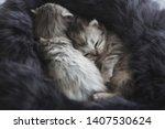 Stock photo cute kittens sleeping on black fur 1407530624