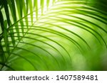 closeup nature view of green... | Shutterstock . vector #1407589481