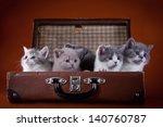 Stock photo british kittens 140760787