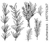 Hand Drawn Spicy Herbs....
