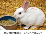 Stock photo english spot rabbit on straw with food pellets in dish 1407746207