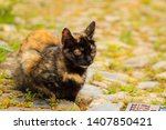 cute cat in a street | Shutterstock . vector #1407850421
