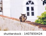 cute cat in a street | Shutterstock . vector #1407850424