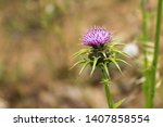 flowering spear thistle ... | Shutterstock . vector #1407858554