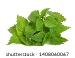 Fresh nettles  isolated on...
