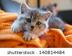 Stock photo little grey cat lying on an orange blanket on the couch 140814484